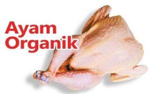 Beternak Ayam Organik, Daging Sehat Bernilai Jual Tinggi