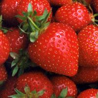 teknis budidaya strawberry